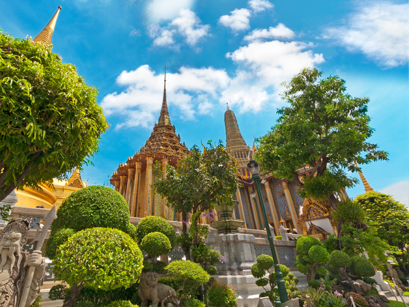 Bangkok & Phuket roses