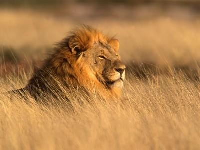 Kenya Fabulosa